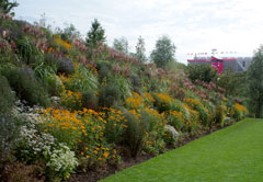 Garden in the Olympic Park